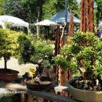フィレンツェの春の園芸市