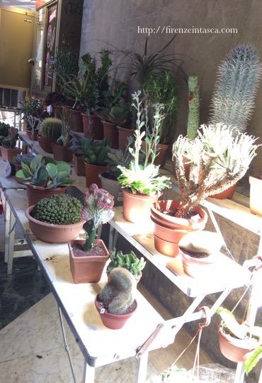 フィレンツェの植栽市