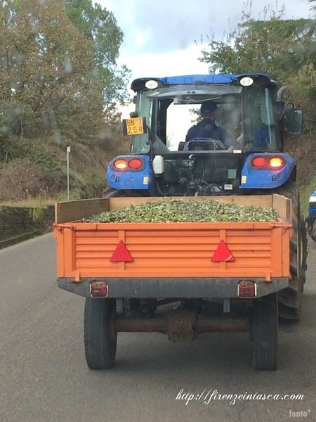 オリーブを運ぶトラック