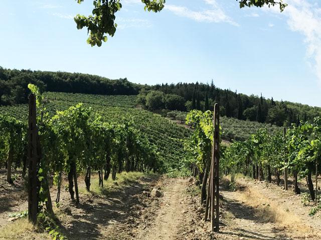 カステッラーレのブドウ畑