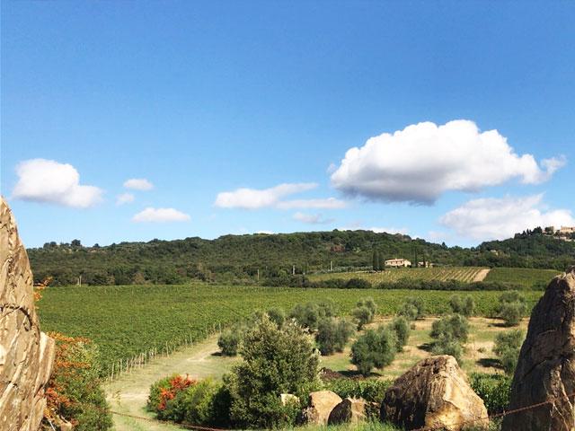 コルドルチャのブドウ畑とオリーブ畑