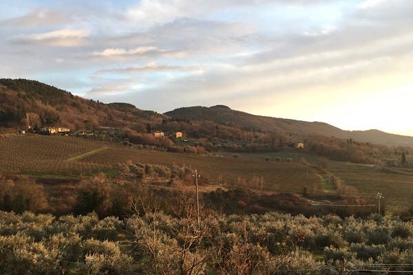 オリーブ畑とブドウ畑
